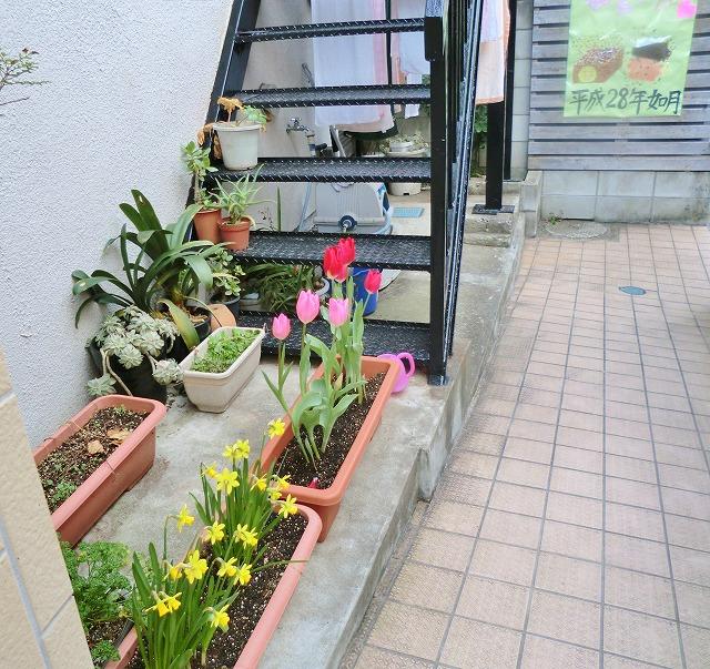 玄関の花壇